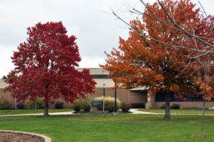 Picture of the fall leaves on campus